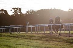Horseracing ()