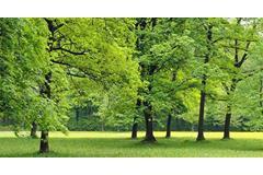 Parks Image ()