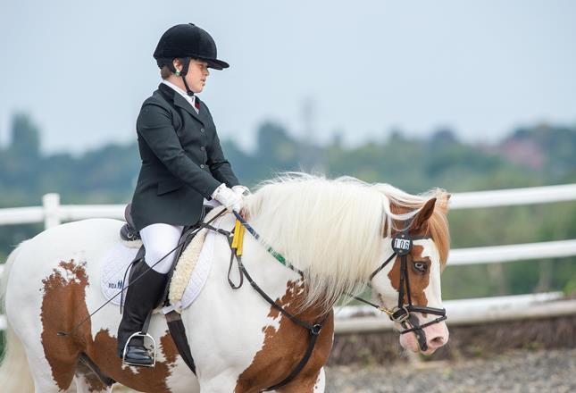 Equestrian 1 ()