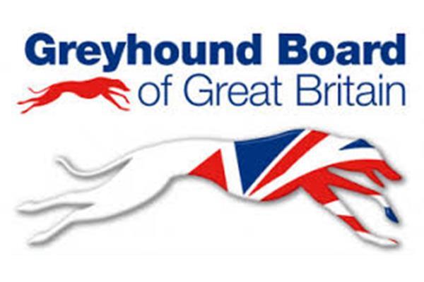 greyhound ()